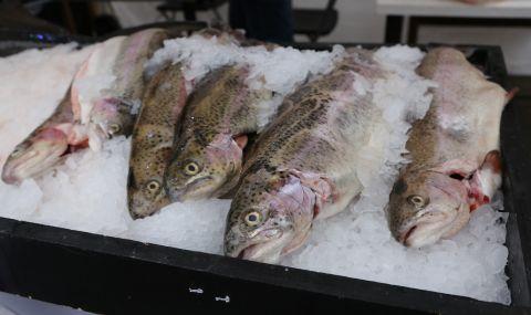 Удължават забраната за улов на есетрови риби