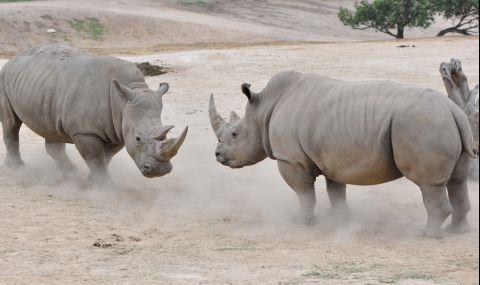 Създадоха 12 ембриона на изчезващия северен бял носорог - 1