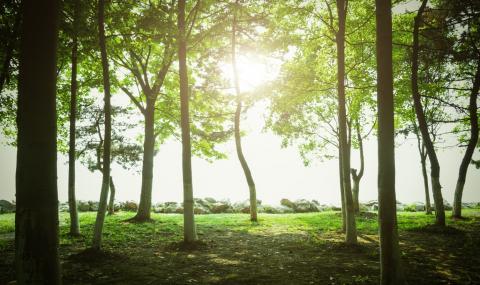 Кипър стартира масово засаждане на дървета