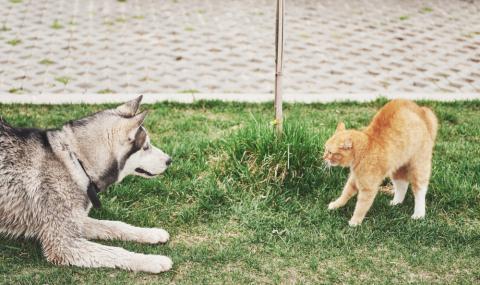 Куче се сблъска с банда улични котки и... (ВИДЕО)