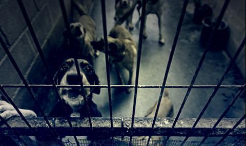Врачанско село на бунт срещу англичанка заради кучешки приют