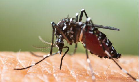Глобалното затопляне превръща комарите в истински зверове