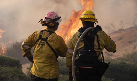 Горски пожари са унищожили 14% от гигантските секвои в света
