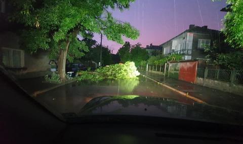 Повреден трафопост и изкоренени дървета след бурите в Монтанско