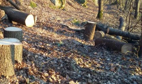 Хванаха 22-годишен бракониер, изсякъл цяла гора