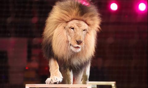 Цирк се спаси от фалит с продажба на изпражнения (СНИМКИ)