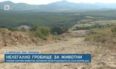 Откриха масов гроб със 140 т. норки край Сливен