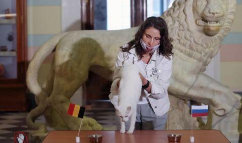 Котаракът Ахил направи своята прогноза за Белгия-Русия, ето каква е тя