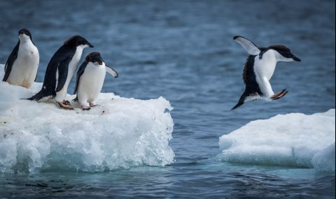 Разпадна се огромният айсберг, застрашавал остров с пингвини