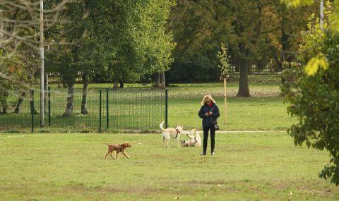 Кощунство! Неизвестен трови кучета и котки в Бургас