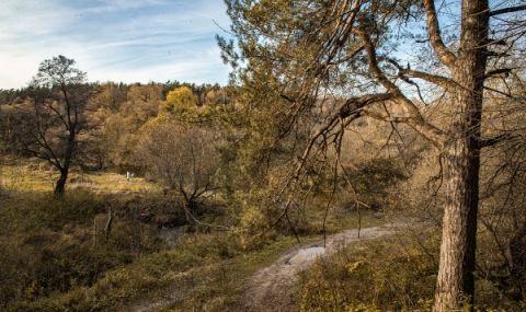 Руски инвеститори зоват за приватизиране на гори