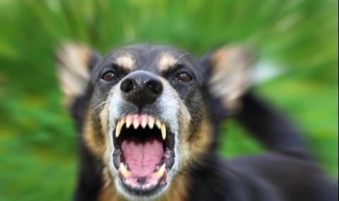 Прокуратурата иска проверки на кучета и стопани