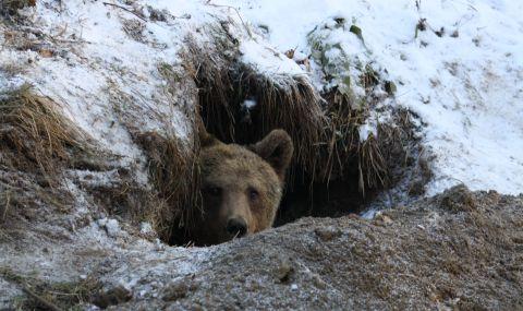 12 случая на щети от мечки в Родопите през април