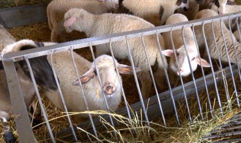 Съмнителни яйца от Полша и агнешко от Северна Македония заливат родния пазар преди Великден