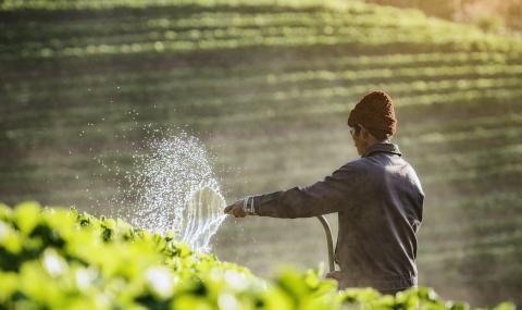 Във Великобритания спешно търсят сезонни работници