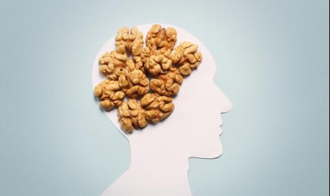 """Ядките превръщат мозъка ни в """"супермозък"""""""