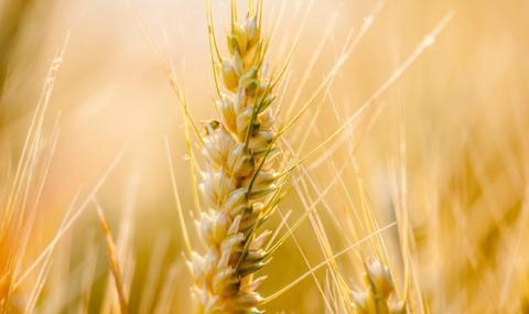 3/4 от директните плащания в селското стопанство отиват при 100 лица