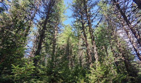Земеделската комисия в Народното събрание разглежда мораториума върху сечта на вековни гори - 1