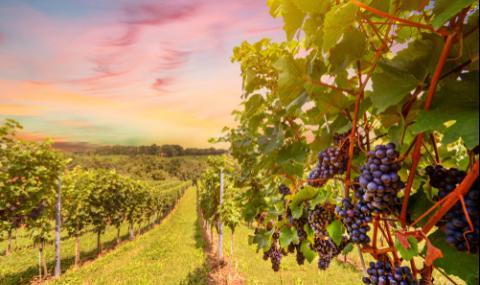 Най-предпочитаните винени райони в Европа