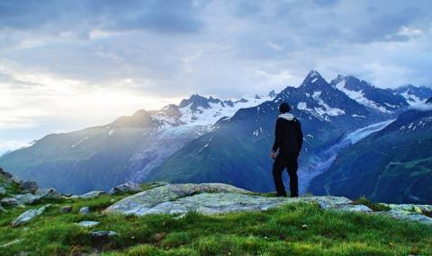 Арника Монтана – планинската билка за жизненост и здраве в ставите