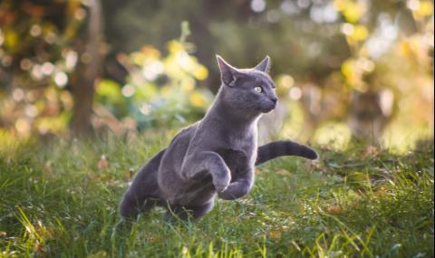 Котка се върна при стопанката си след 12 години, но...