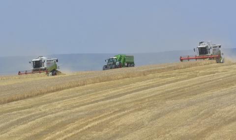Пълен провал на реколтата от пшеница