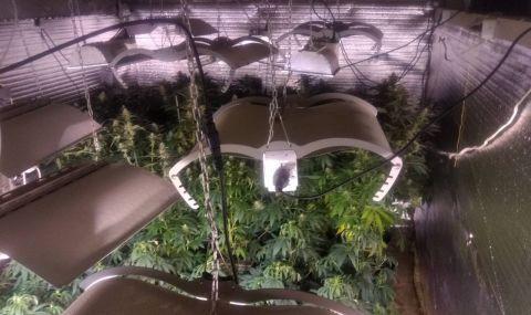 Разбиха оранжерия за марихуана в Разград - 1