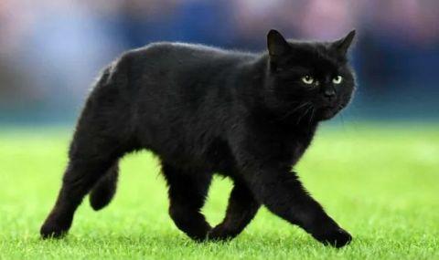 Зрители на футболен мач спасиха падаща от високо котка (ВИДЕО) - 1