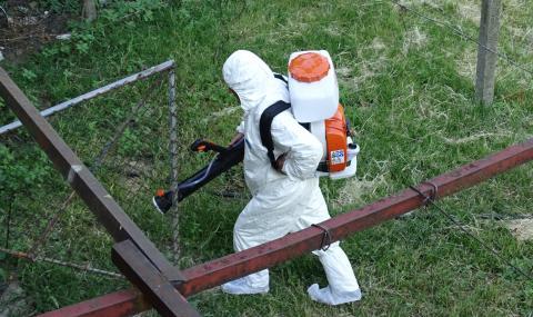 Огнище на африканска чума и в Момчилград