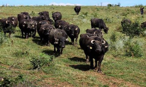 15 000 животновъди получиха над 6 милиона лева помощ de minimis