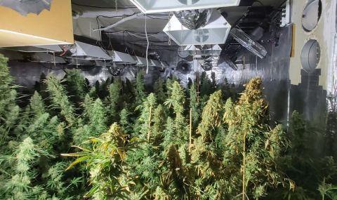 30% ръст на трафика на марихуана към Турция през България