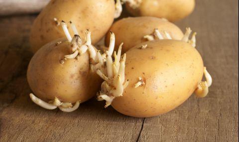 Лечебните свойства на кълновете от картофи