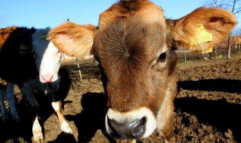 Европарламентът готви промени, застрашаващи животновъдството и живoтнитe в България - 1