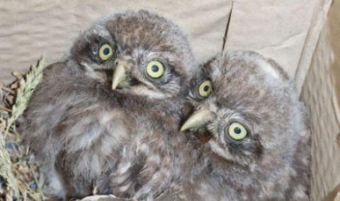 Експерти от РИОСВ-Русе са спасили 10 защитени птици за месец