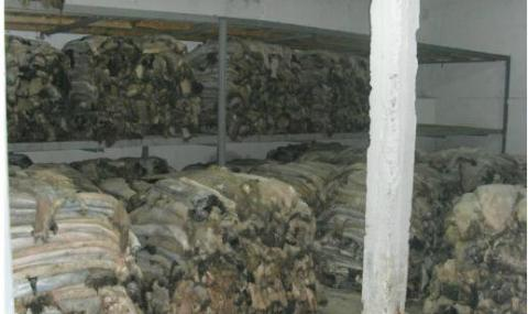 Веганите настояват за тотална забрана на кожодерската индустрия
