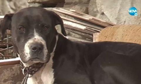 Агресивен питбул уби няколко животни и нахапа хора в Бургаско