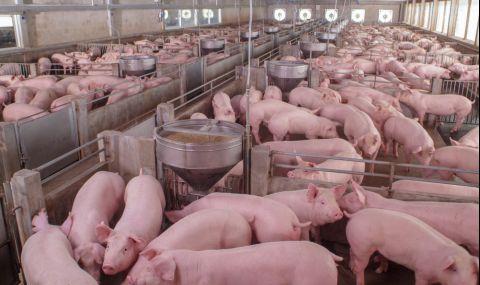 Свинекомплексите в България вече свободно могат да изнасят месо за Европейския съюз