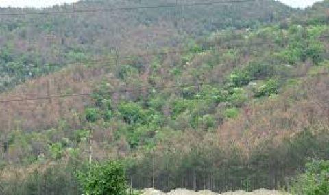 Държавата отделя 2 млн. лв. за изкупуване на частни гори