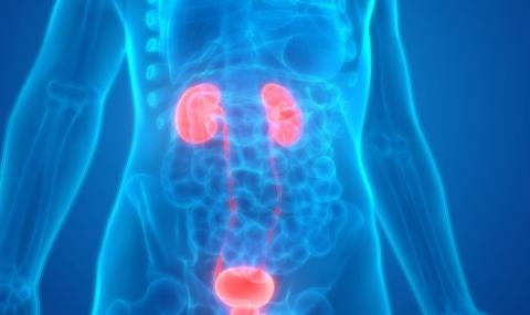 Препоръки при злокачествени заболявания на пикочополовата и отделителната система