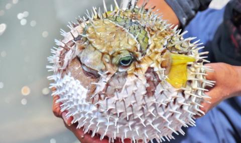 Опасна риба осакати дете