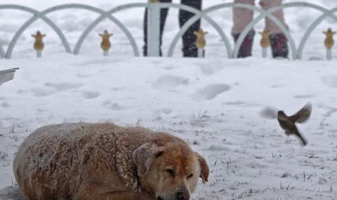 Сняг при съседите