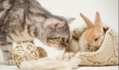 Котка, израснала със зайци, разсмя мрежата (ВИДЕО)