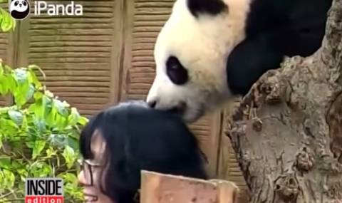 Панда захапа жена, за да не си прави селфи с нея (Видео) - 1