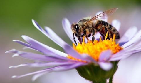 Компания глези пчели с... пица