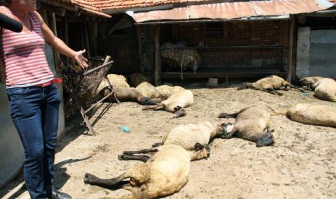 В Шарково се борят със зъби и нокти за животните си