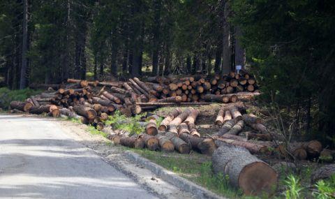 Започват засилени проверки покрай наложената забрана за изсичане на гори в страната