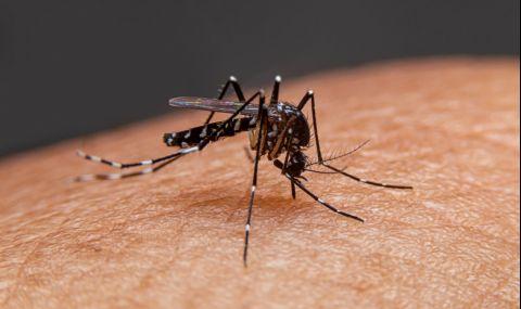 Трикове против ухапване от комари