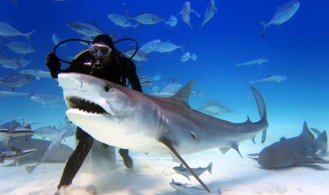 Гмуркач засне необичайно едра акула (СНИМКИ)