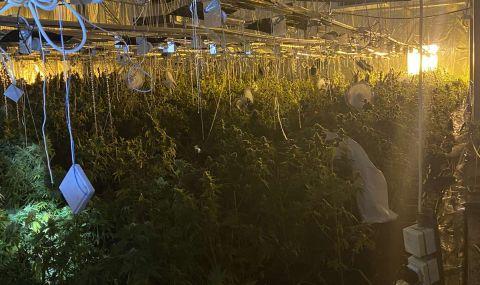 Вижте СНИМКИ от оранжерията за отглеждане на марихуана, разкрита в
