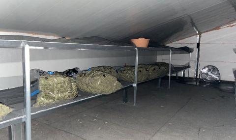 Разбиха нарколаборатория в Калугерово, откриха марихуана за 500 хил. лв.